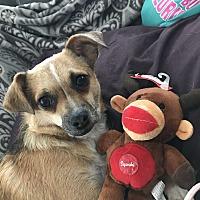 Adopt A Pet :: Bossier - Mandeville, LA