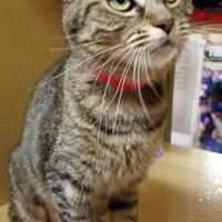 Adopt A Pet :: Tulip - Lakeland, FL