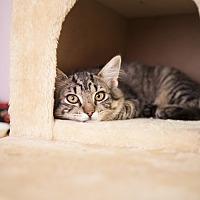 Adopt A Pet :: Bramble - Shelton, WA
