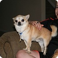 Adopt A Pet :: Diego - Commerce City, CO