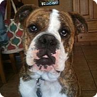 Adopt A Pet :: Boscoe - Phoenix, AZ