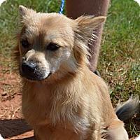 Adopt A Pet :: Wesley-adoption in progress - Marshfield, MA