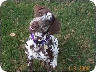 Dalmatian Puppy for adoption in League City, Texas - Paris