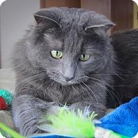 Adopt A Pet :: Hans & Greta - Roseville, MN