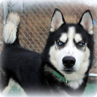 Adopt A Pet :: *FOSTER NEEDED* Aries - Parsippany, NJ