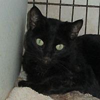 Adopt A Pet :: Bessie - San Bernardino, CA