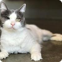 Adopt A Pet :: Bella - Lathrop, CA