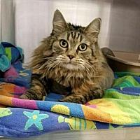 Adopt A Pet :: Taddy - Fresno, CA