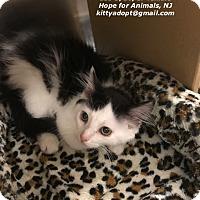 Adopt A Pet :: Dixie - Marlboro, NJ