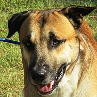 Adopt A Pet :: MITCHUM - Carrollton, TX
