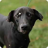 Adopt A Pet :: Puzzle - Lancaster, OH
