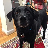 Adopt A Pet :: Coco - Hagerstown, MD
