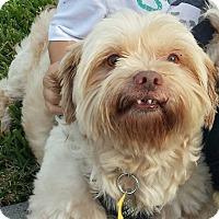 Adopt A Pet :: Jack - Kingwood, TX