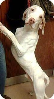 Hound (Unknown Type) Mix Dog for adoption in Columbus, Georgia - Earl 7708