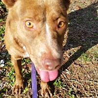 Adopt A Pet :: Roxi - Rocky Point, NC