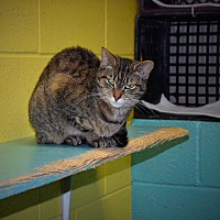 Adopt A Pet :: Gander - Pottsville, PA