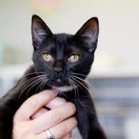 Adopt A Pet :: Shell - Alpine, TX