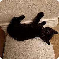 Adopt A Pet :: Iso - Scottsdale, AZ