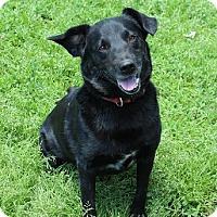Adopt A Pet :: Collin - Owasso, OK