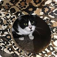 Adopt A Pet :: Sarabelle - Phoenix, AZ