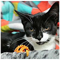 Adopt A Pet :: Divine - Forked River, NJ