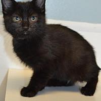 Adopt A Pet :: Georgia - Knoxville, IA