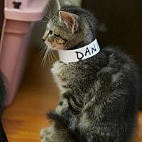 Adopt A Pet :: Dani - Chattanooga, TN