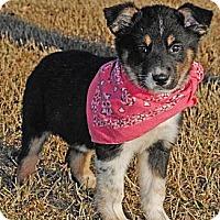 Adopt A Pet :: Noel - Gonzales, TX
