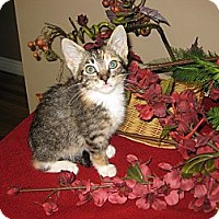 Adopt A Pet :: Tropicana - Clearfield, UT