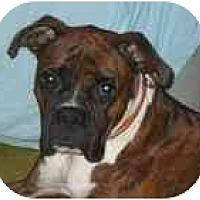 Adopt A Pet :: Cletus - Thomasville, GA