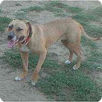 Adopt A Pet :: Sissy - Bakersfield, CA