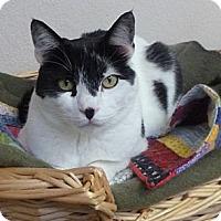 Adopt A Pet :: Madigan - St. Petersburg, FL