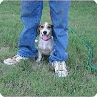 Adopt A Pet :: Prucilla - Glastonbury, CT