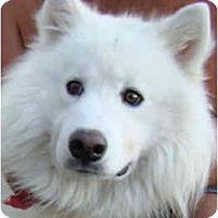 Adopt A Pet :: BJ - Arvada, CO