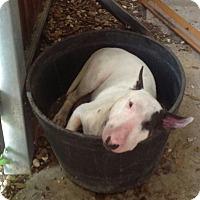 Adopt A Pet :: Newman-Glenwood, AR - Glenwood, AR