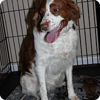 Adopt A Pet :: Winnie - Howell, MI