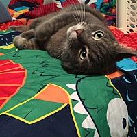 Adopt A Pet :: Chance - Burlington, ON