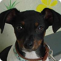 Adopt A Pet :: Jerry - Erwin, TN