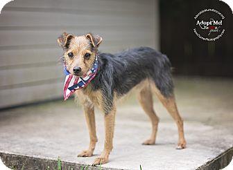 Border Terrier Mix Dog for adoption in Portland, Oregon - CHARLIE