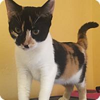 Adopt A Pet :: Clarissa - Encinitas, CA