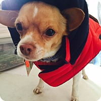 Adopt A Pet :: Banjo - Beavercreek, OH