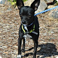 Adopt A Pet :: Chip - Yreka, CA