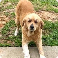Adopt A Pet :: Dena and Doc - New Canaan, CT