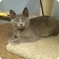 Adopt A Pet :: Gryta - Grove City, OH