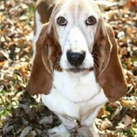 Adopt A Pet :: Fred - Vail, IA