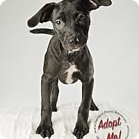 Adopt A Pet :: Nappie - Gillsville, GA