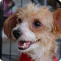Adopt A Pet :: Snoopy - Cary, NC