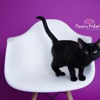 Adopt A Pet :: Paddy - Wausau, WI