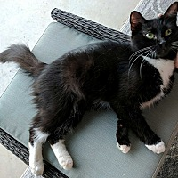 Adopt A Pet :: Luna - Edmond, OK