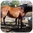 Photo 4 - Quarterhorse for adoption in Washington, Connecticut - Jody